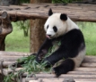 China River Cruise - Giant Panda Reserve, Chengdu